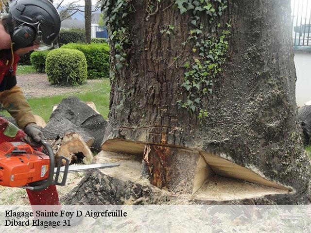 Elagage d 39 arbre sainte foy d aigrefeuille t l 05 19 65 for Devis elagage